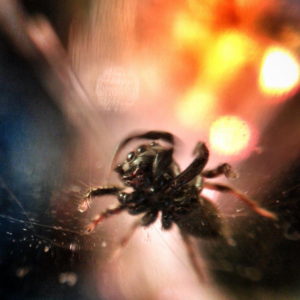 Superstar-Spider-III-lets-shake-it.jpg